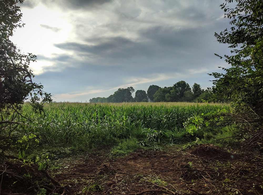 Beautiful Rural Indiana Morning - Back40House - Pendleton, IN